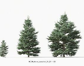 Abies concolor white fir coniferous-growfx-mesh 3D