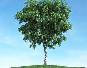 3D model Outdoor Maple Tree