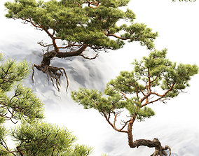 3D model mugo Pine On Rock 01