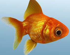 3D Golden Fish fish