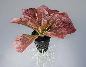 3D lettuce red