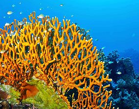 3D asset Coral life collection