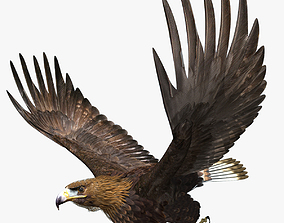 Golden Eagle - rigged - animated 3D model