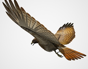 3D model Red Tailed Hawk - rigged - animated