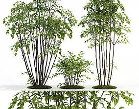 3D Plants collection 84