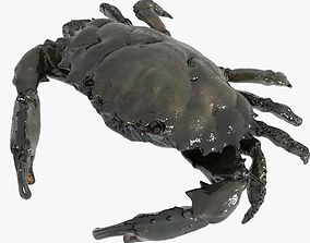 3D asset animated Crab PBR