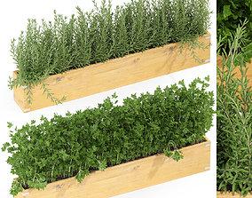 Plants collection 286 3D model
