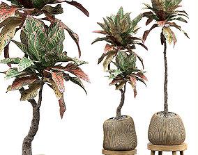 botanical 3D model Potted plants Set 33