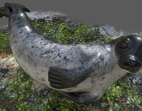 3D model VR / AR ready Common Seal Rigged