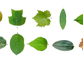Leaf texture 10 pack tree leaves 3D model