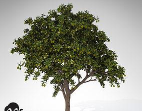 3D model XfrogPlants Large Mango tree