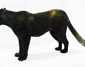 realtime Realistic Fur Black Panther3D Model NO RIG