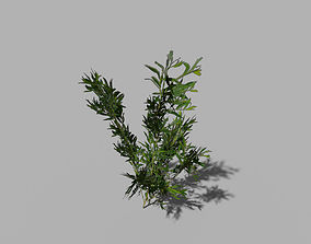 3D asset low poly river shrub