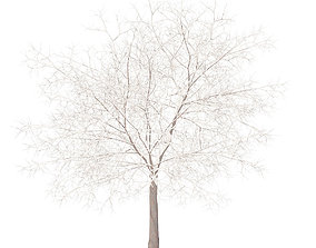 White Oak with Snow 7point5m 3D