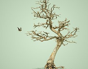 Dead Bonsai Tree 9 3D