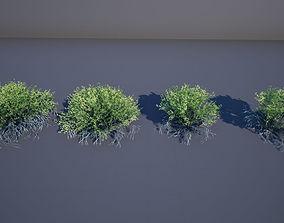3D asset low-poly Creosote Bush