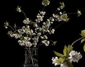 3D model Japanese cherry branches white