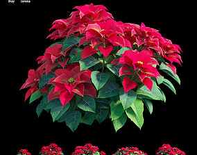 Poinsettia plant 03 3D model