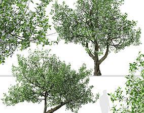 3D Set of Crataegus monogyna or Common hawthorn Trees - 2