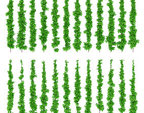 3D Leaves of grapes on the vine