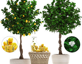 3D Lemon Tree with Fruit