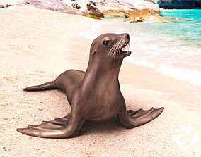 Sea Lion 3D model rigged game-ready