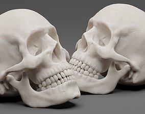 3D model rigged Photorealistic human skull