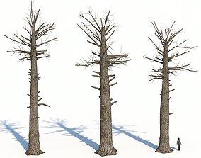 Dead Giant Redwoods Trees 3D asset realtime