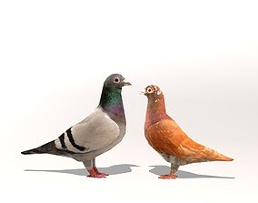 3D model low-poly Two Pigeons
