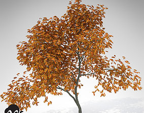 XfrogPlants Vine Maple 3D model