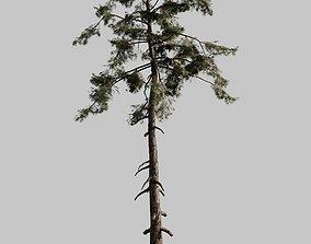 3D model Pine 01 V-Ray