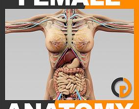Human Female Anatomy Body Skeleton Internal 3D model