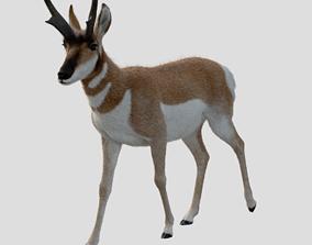 3D 2020 Pronghorn Antelope Male