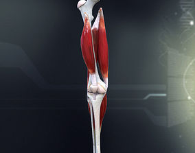 3D Human Knee Joint Anatomy