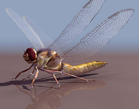 3D model Dragonfly nuture