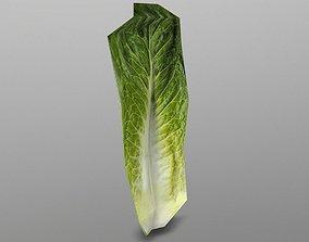 3D model Roma Lettuce