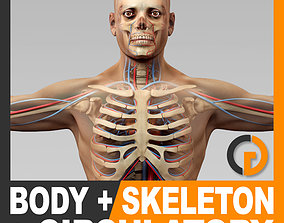 Human Male Body Circulatory System and Skeleton - 3D model