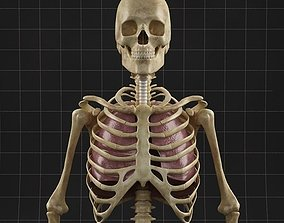 Anatomy Lungs and complete Skeleton 3D