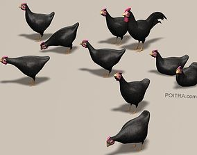 3D model Chicken Ranch - Rooster and 9 Posed Hens - Black