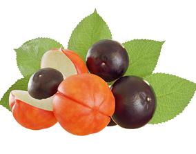 3D Guarana fruit
