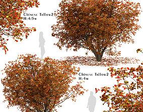 3D model Set of Chinese tallow or Triadica sebifera 3