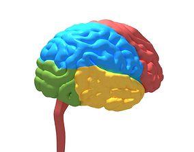 Human Brain cerebrum 3D model