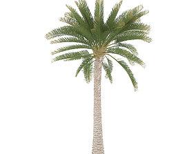 3D animated Palm Tree
