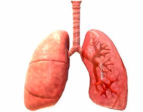 Respiratory System 3D model game-ready bronchi