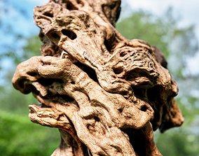 3D model Olive tree base trunk