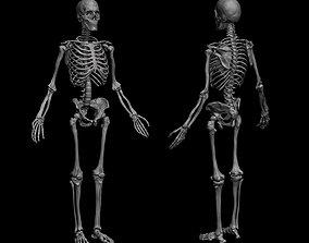 Anatomical Human Skeleton 3D
