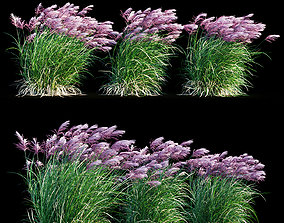 Miscanthus sinensis RED CHIEF in wind 3D model lawn