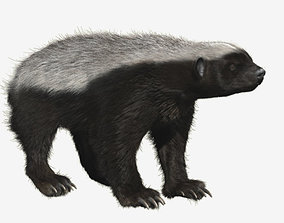 3D model Honey badger with realistic fur