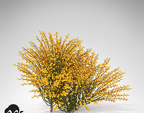 XfrogPlants Spanish Broom 3D