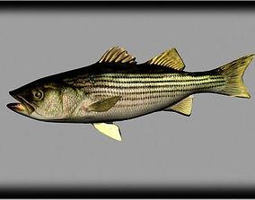 3D model striped bass